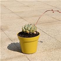 紫灿 悠庭植物纤维花盆 01355 大号 ¢19*15.5  12/箱 (整箱起订)