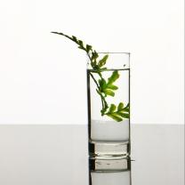 Ocean 圣玛连奴玻璃水杯 290ml